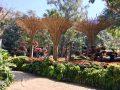 Doi Tung Garden_๑๙๐๒๑๑_0007