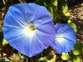 Doi Tung Garden_๑๙๐๒๑๑_0016