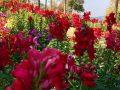 Doi Tung Garden_๑๙๐๒๑๑_0024