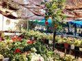 Jerusalem_Gardening (5)